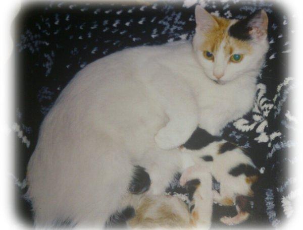 funnet registerte katter